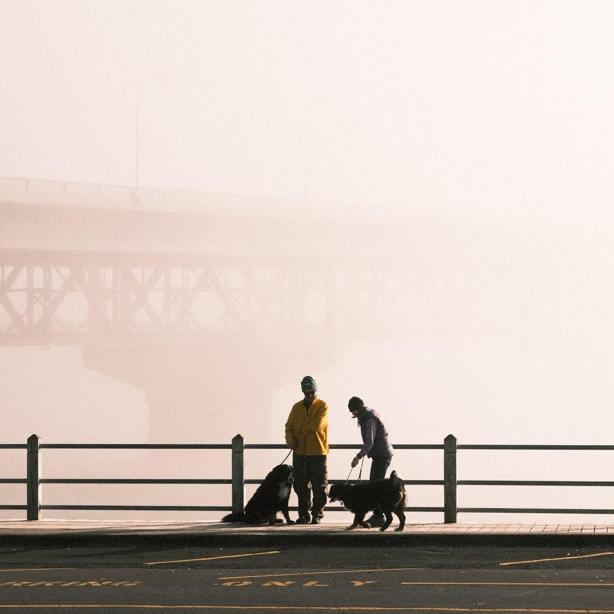Magical foggy Sundaymorning